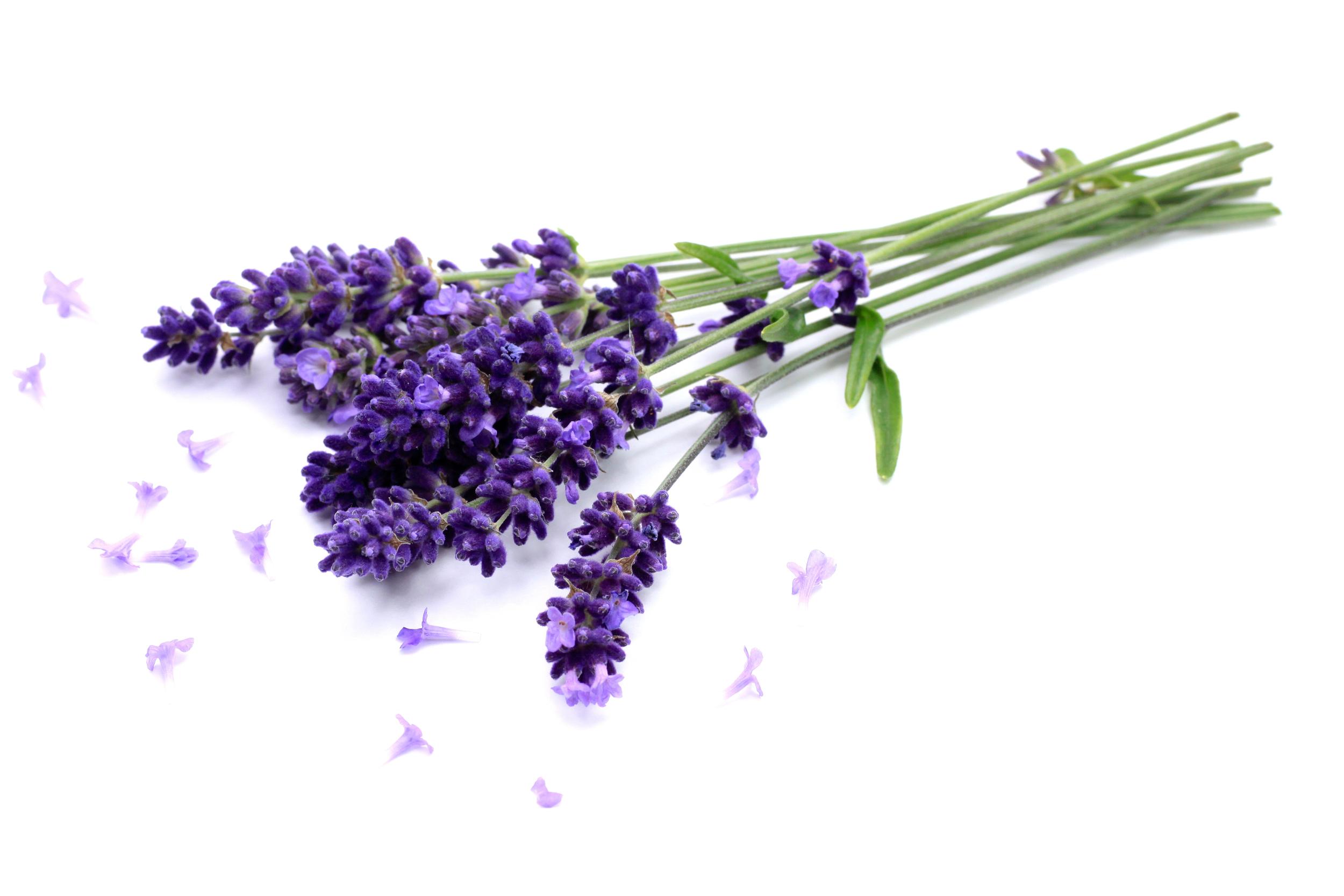 lavendar3.jpg