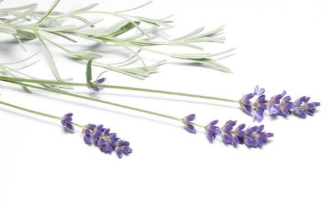 lavender_sprigs.jpg