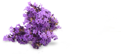 lavender-clean-decoration-back.png