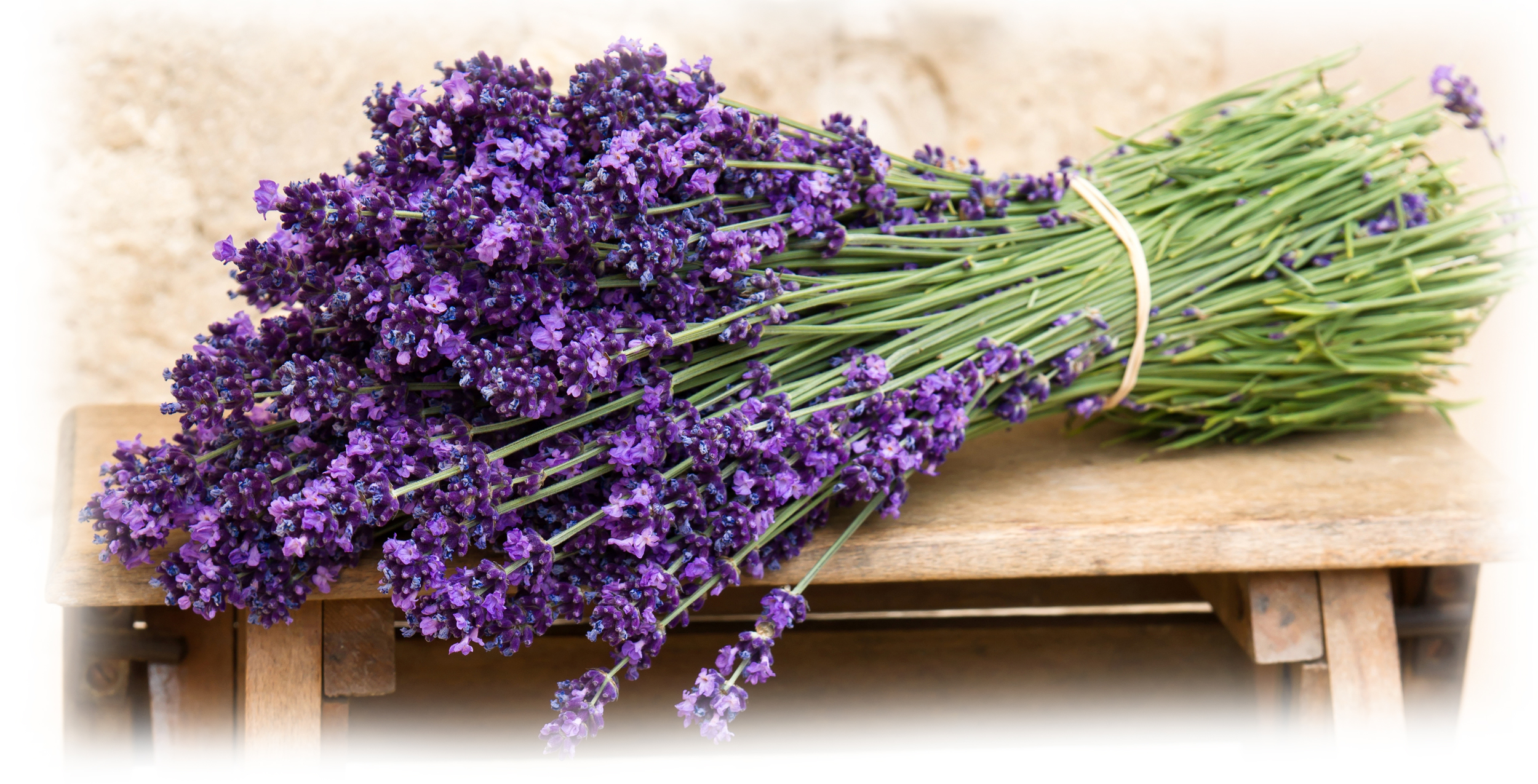 lavender-flowers-bouque.jpg