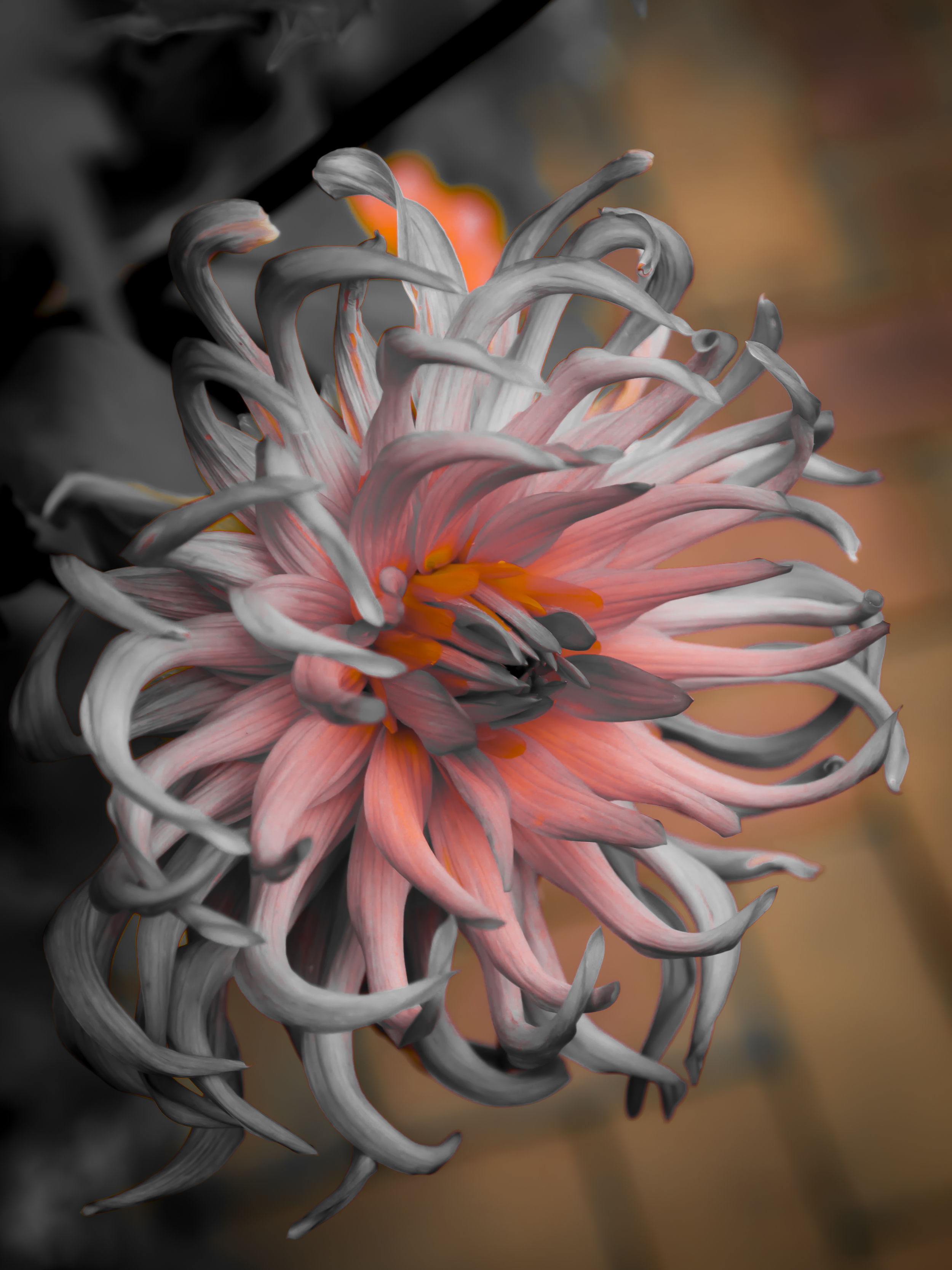 Alien Flower.JPG