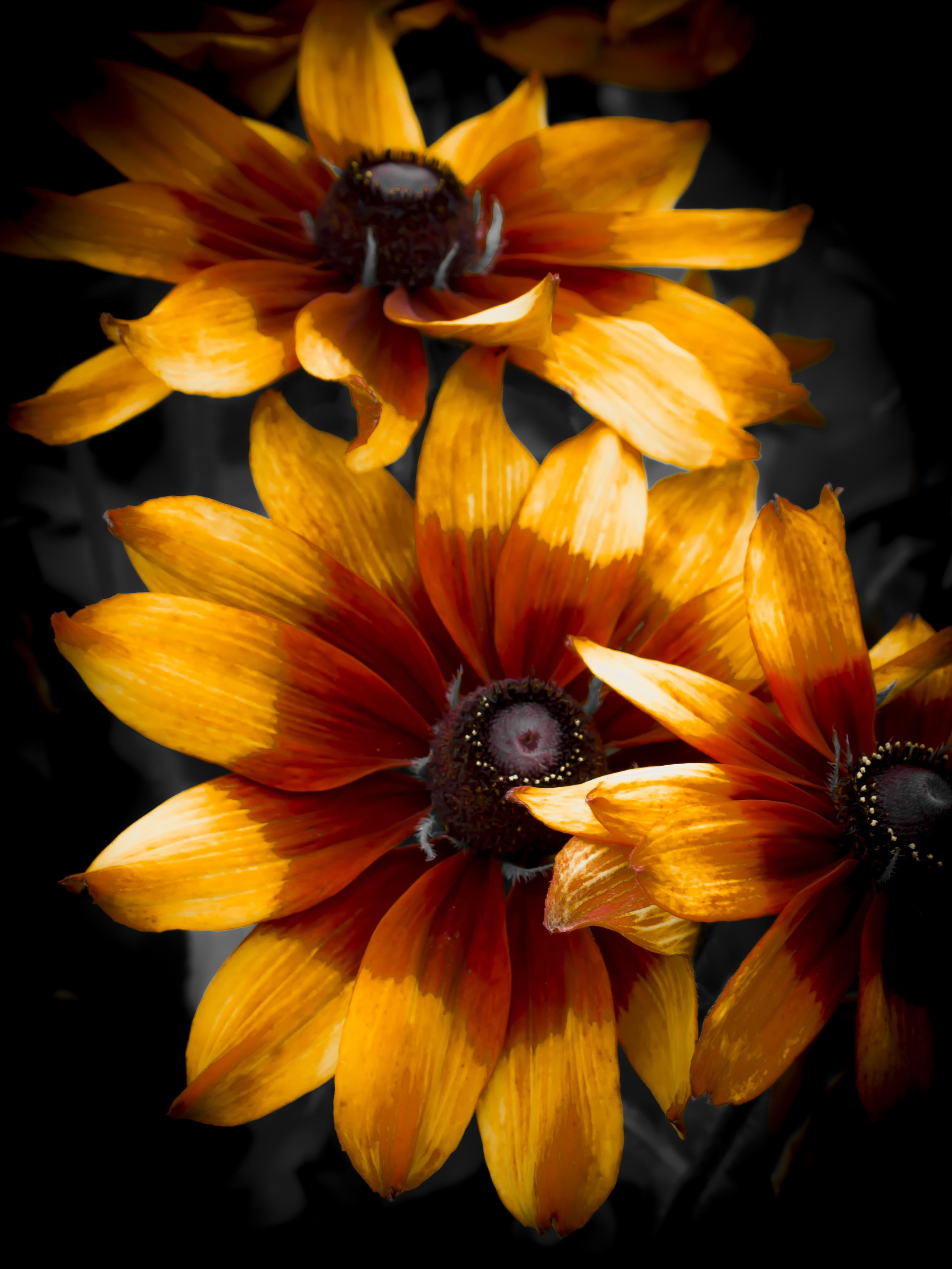 Fire Flowers.JPG