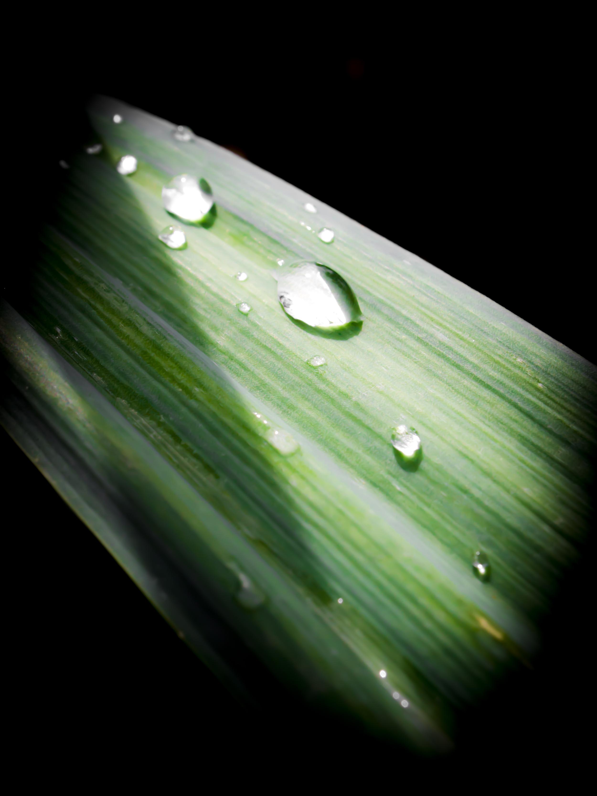 Leaf Water Droplets.JPG