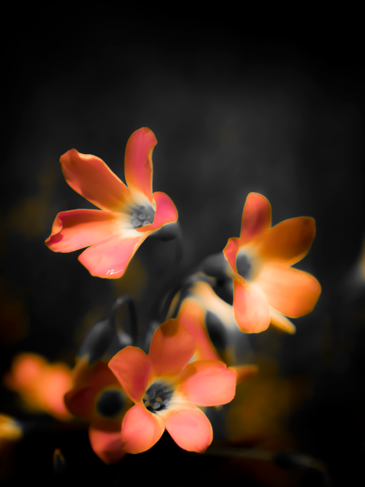 Chicago-Flower-Show-2015-6.png