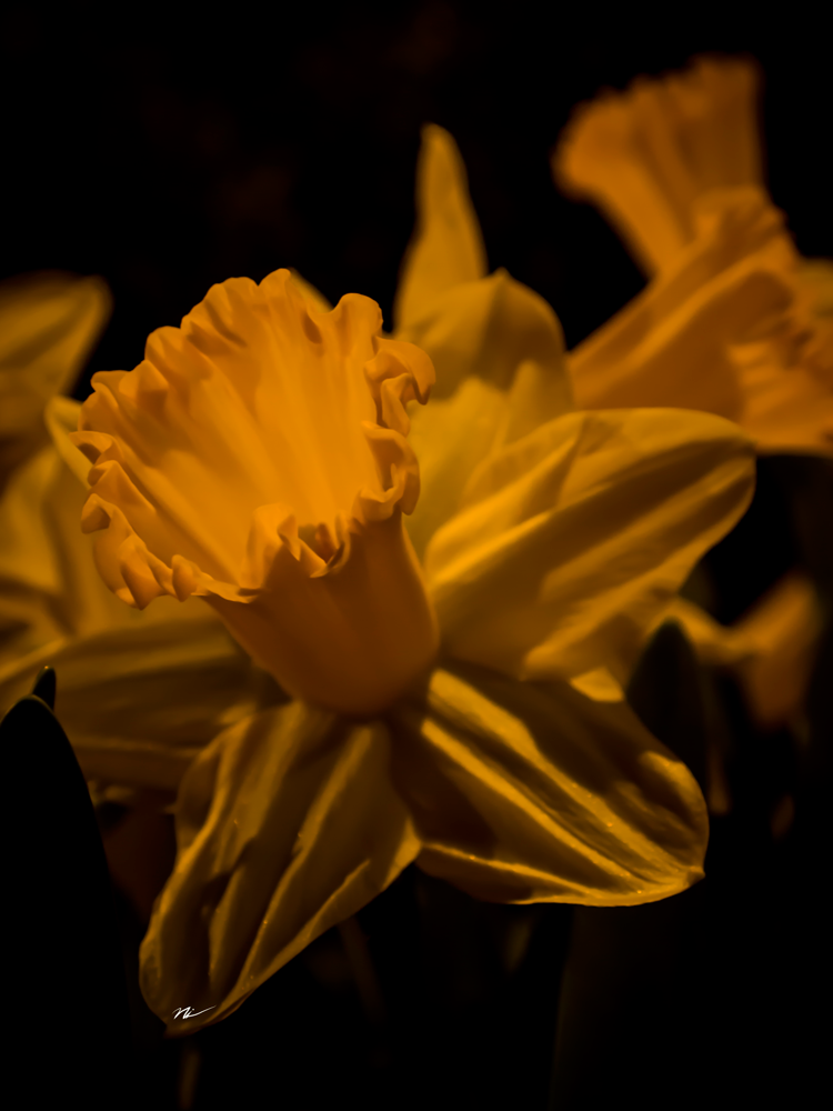 Chicago-Flower-Show-2015-5.png