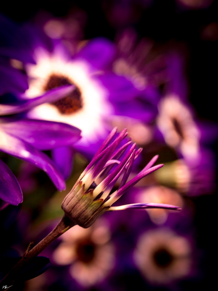 Chicago-Flower-Show-2015-14.png