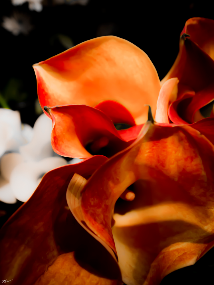 Chicago-Flower-Show-2015-17.png