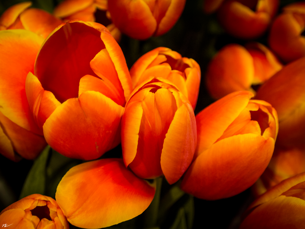 Chicago-Flower-Show-2015-19.png