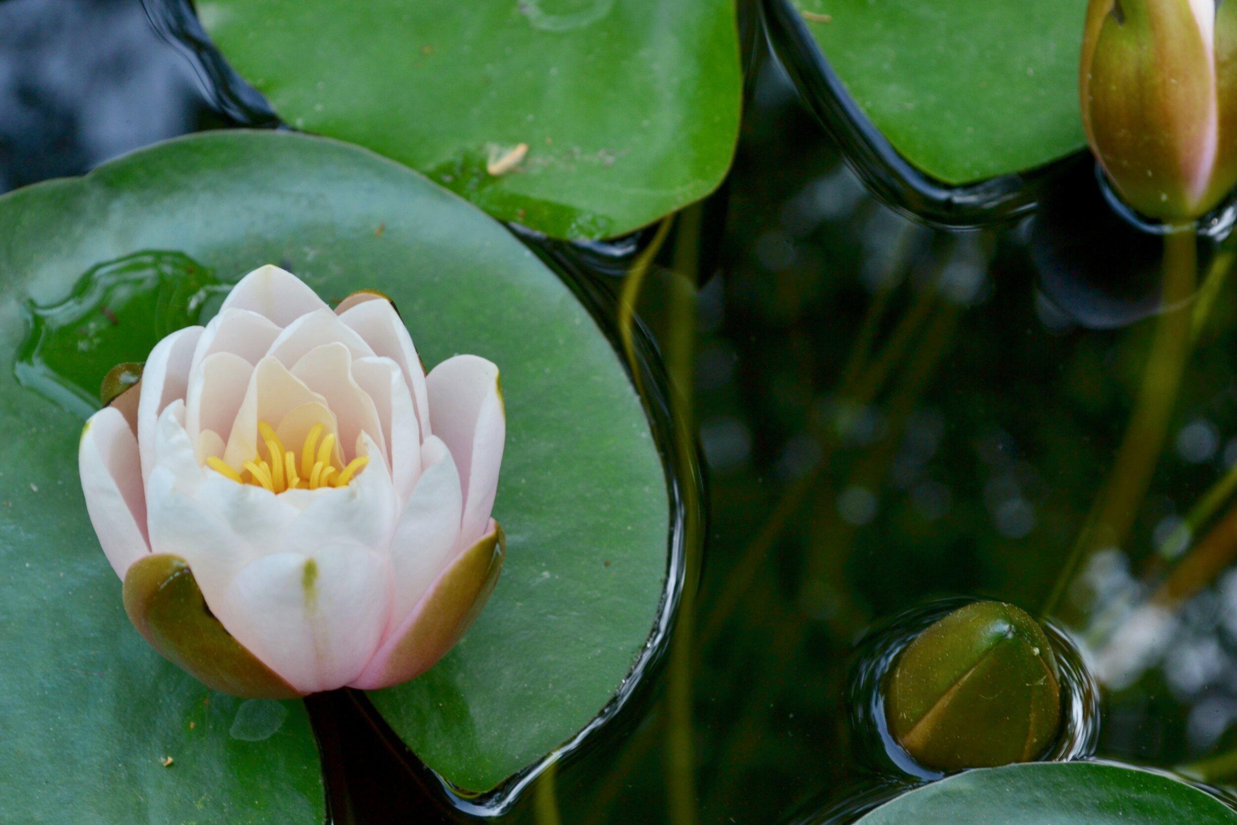 lily.jpeg