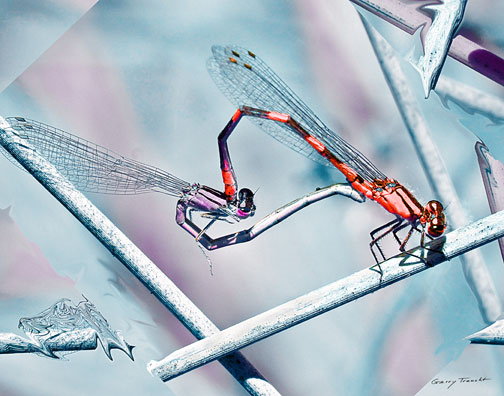An enchanted world of dragonflies