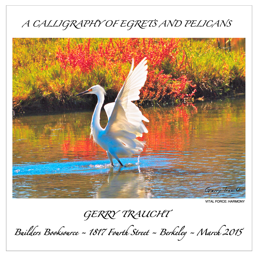 AS NATURE SPEAKS EVERYWHERE, THE EGRETS AND PELICANS REACH INTO THE URBAN SETTING WITH AN UNDENIABLE MAGNIFICENCE AND ELOQUENCE.        THIS LUMINOUS MOMENT IS IN A LAGOON BESIDE A MAIN FREEWAY ENTRANCE TO BERKELEY AT NOON.     •     Joining the Egrets and Pelicans is BUDDY IN A HARLEY HAT by ELLIE FIDLER. ELLIE's tea towels, that double as fine art wall hangings, are exhibited on the south wall.
