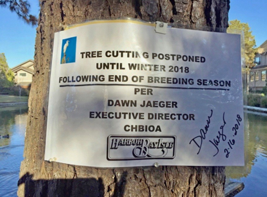 3. In January, 2018, there was a sign on the tree, marking it for removal. The tree still appeared strong, but the community's maintenance crew said it was dying. The egrets had not arrived yet. There was nothing to stop the tree removal in this private community.  Fortunately a family of nesting white-tailed kites, small graceful hawks, was discovered in a nearby tree. They are protected in the state of California and federally by the Migratory Bird Treaty Act, once their breeding begins.  With this evidence Cindy Margulis and the Golden Gate Audubon team and friends spoke up for the tree. The tree cutting was postponed for one more breeding season. And what a season it was to become.  Photo 3: SIGN
