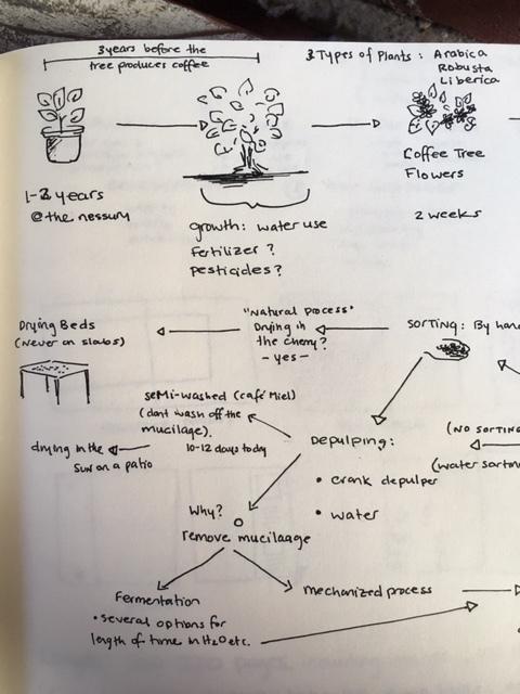 Coffee-Process-2.JPG