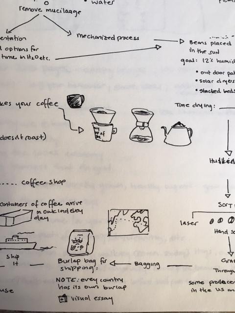 Coffee-Process-3.JPG