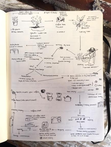 Coffee-Process-1.JPG