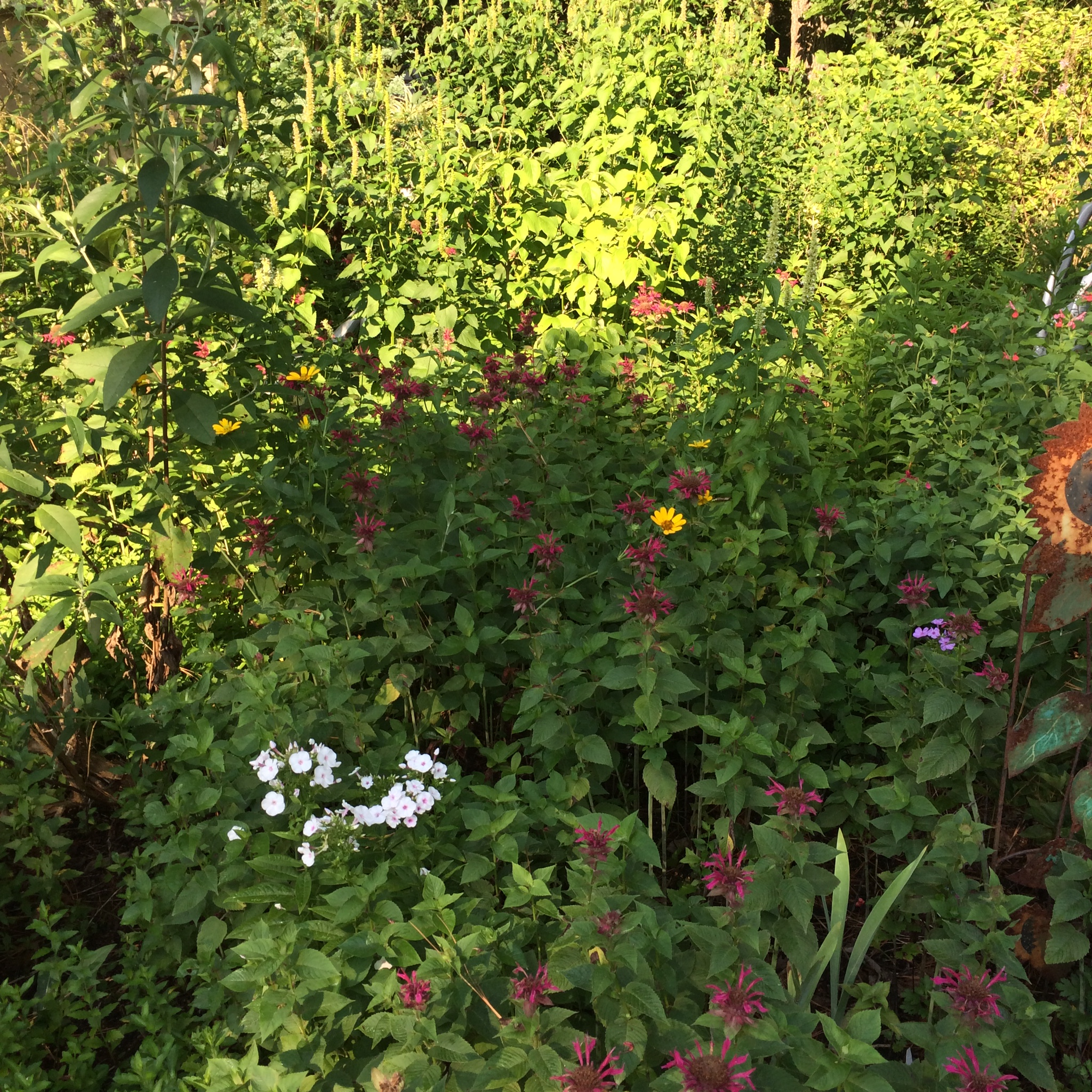 Plant Finder Big Bloomers Flower Farm