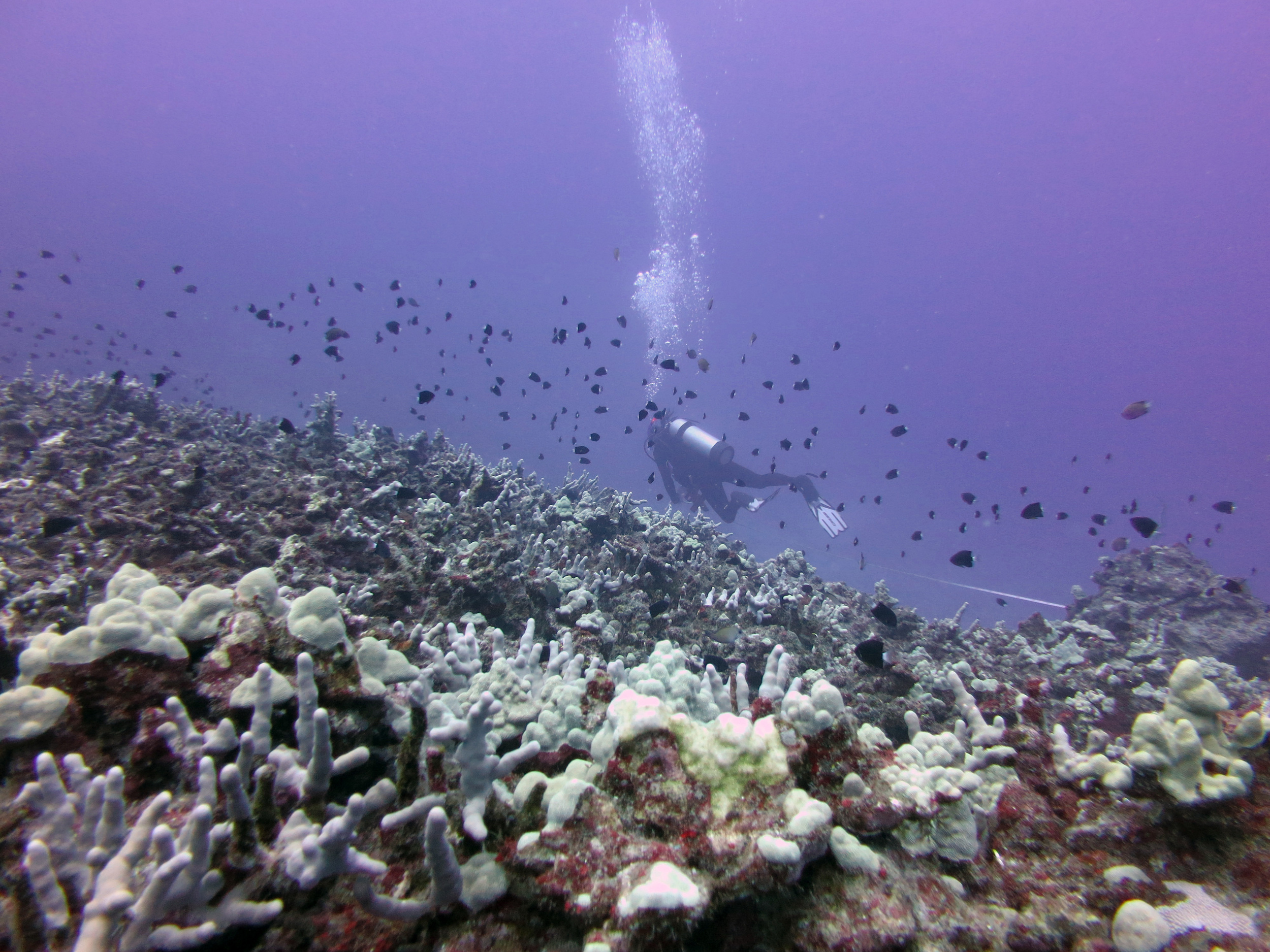 Mesophotic reef research in Kona, Hawaii, 2013