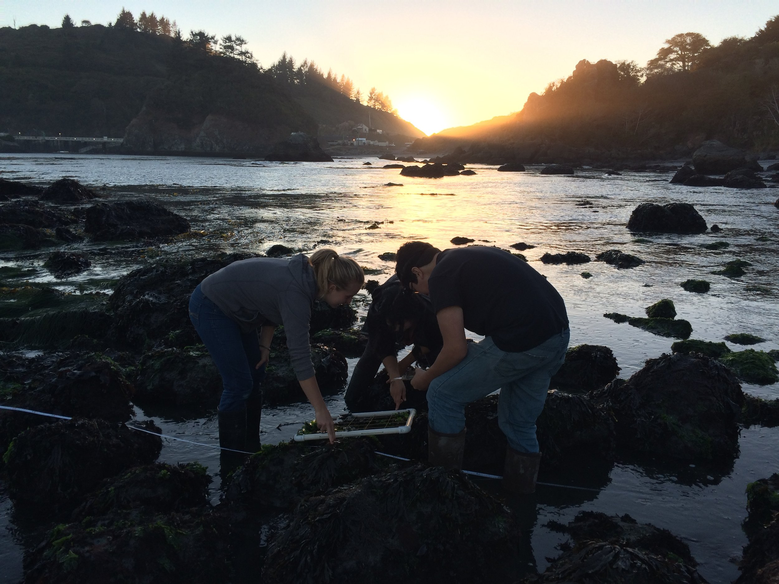 Intertidal survey lab during Benthic Ecology Course, Fall 2016.