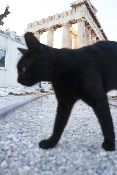 You've all seen photos of the Parthenon but have you seen the Cats of the Parthenon?