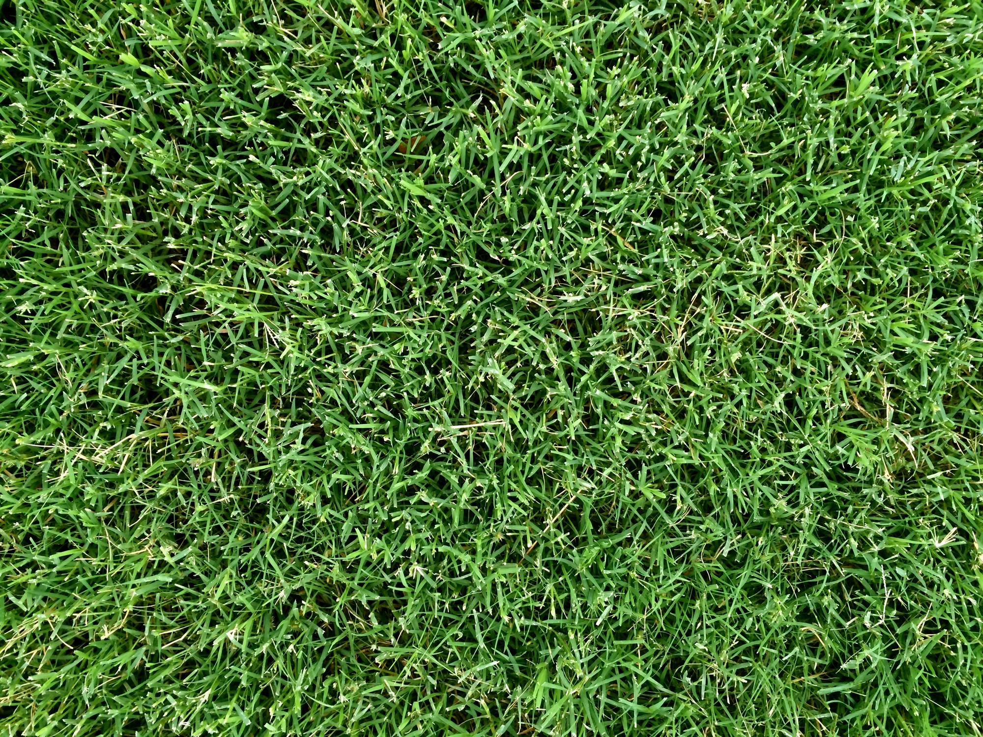 Look Down Grass Texture