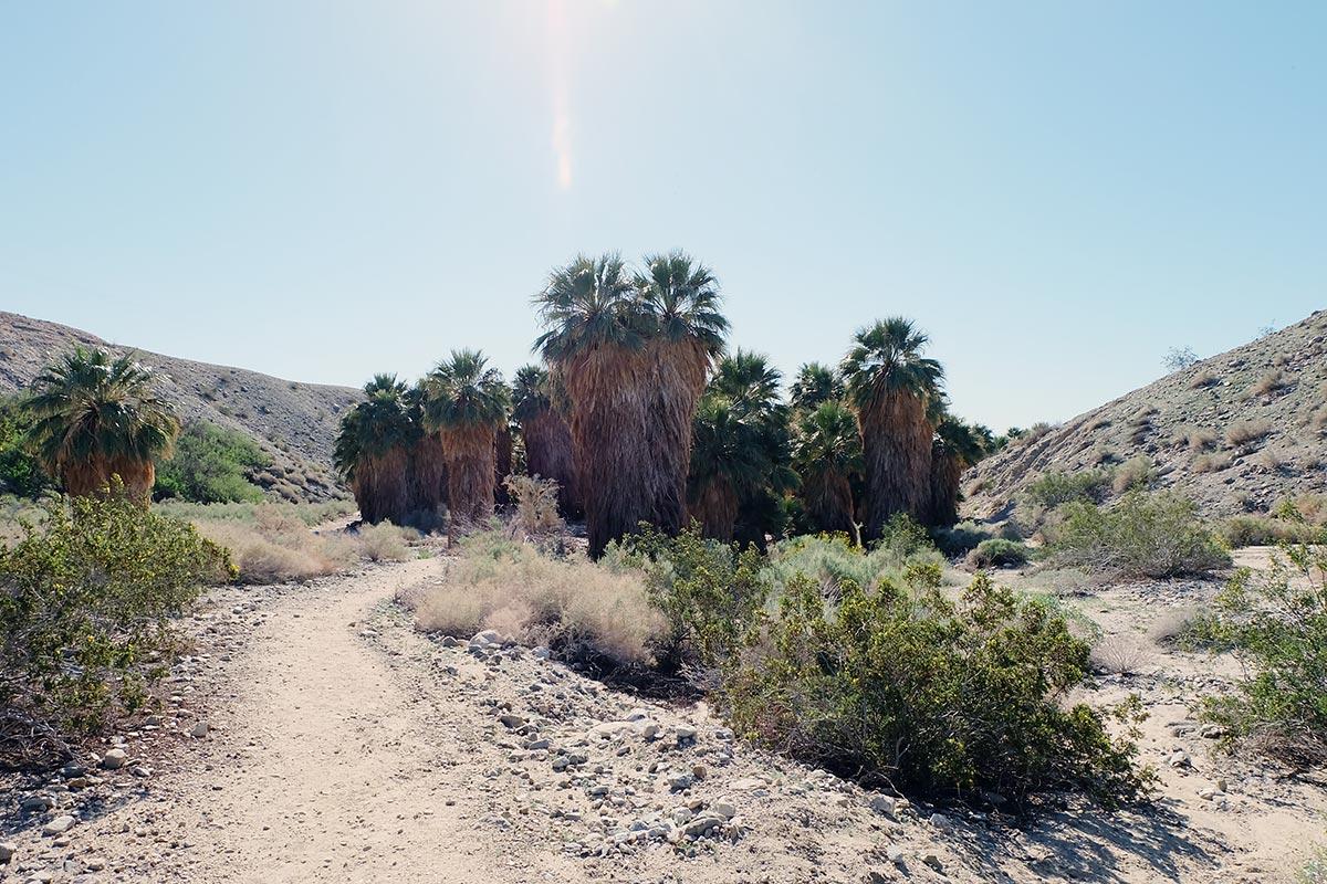 Hidden Palms Oasis