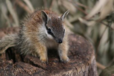 Photo Courtesy Perth Zoo