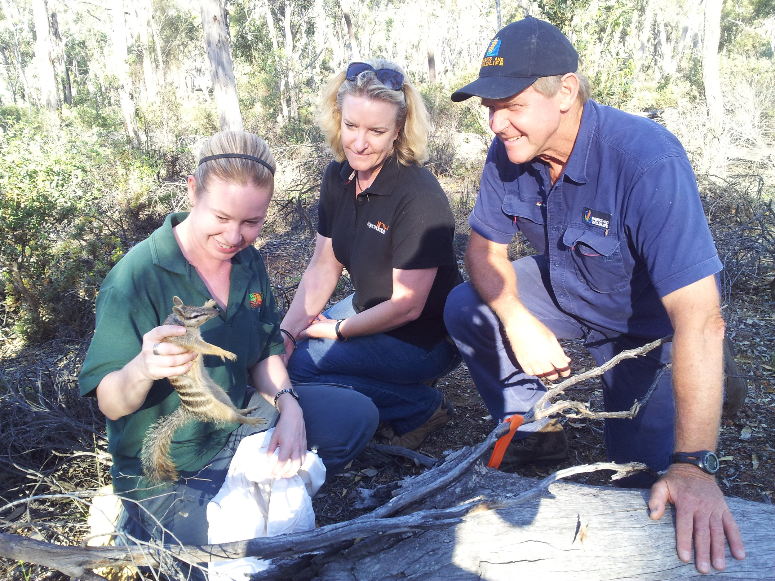 Karen (Centre) representing Project numbat along with Perth Zoo and PARKS AND WILDLIFE staff at the 2014 Numbat release AT DRYANDRA WOODLAND.