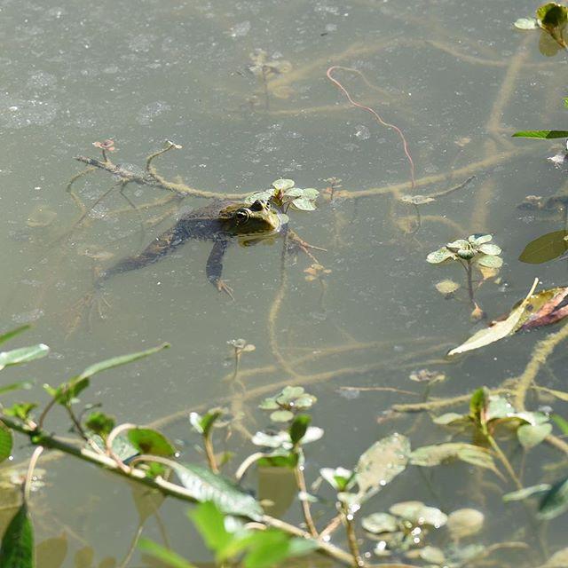 #findingfrogs