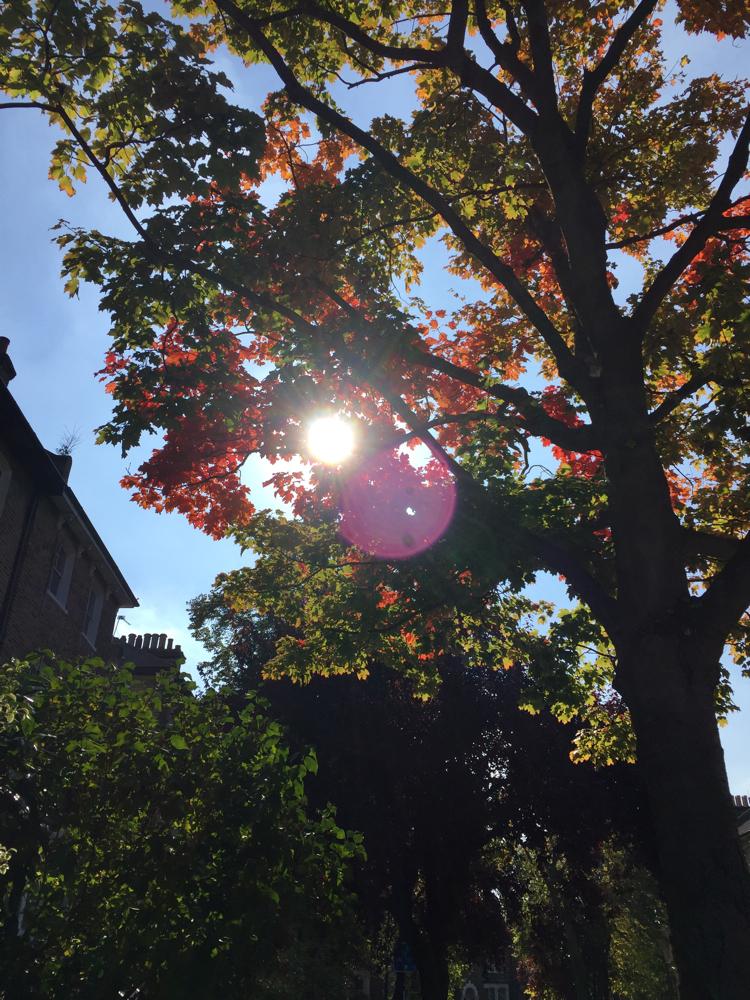 October, London: My street ♡.