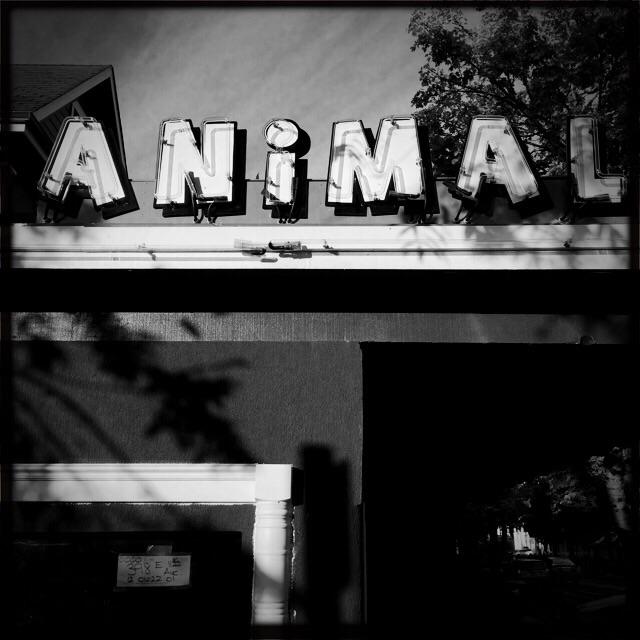 Animal House Saloon