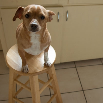 Malcolm-on-the-Stool.jpg