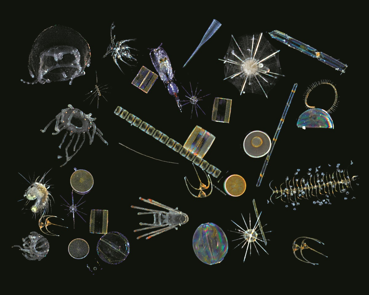 Plankton make up 98 percent of the oceans' biomass