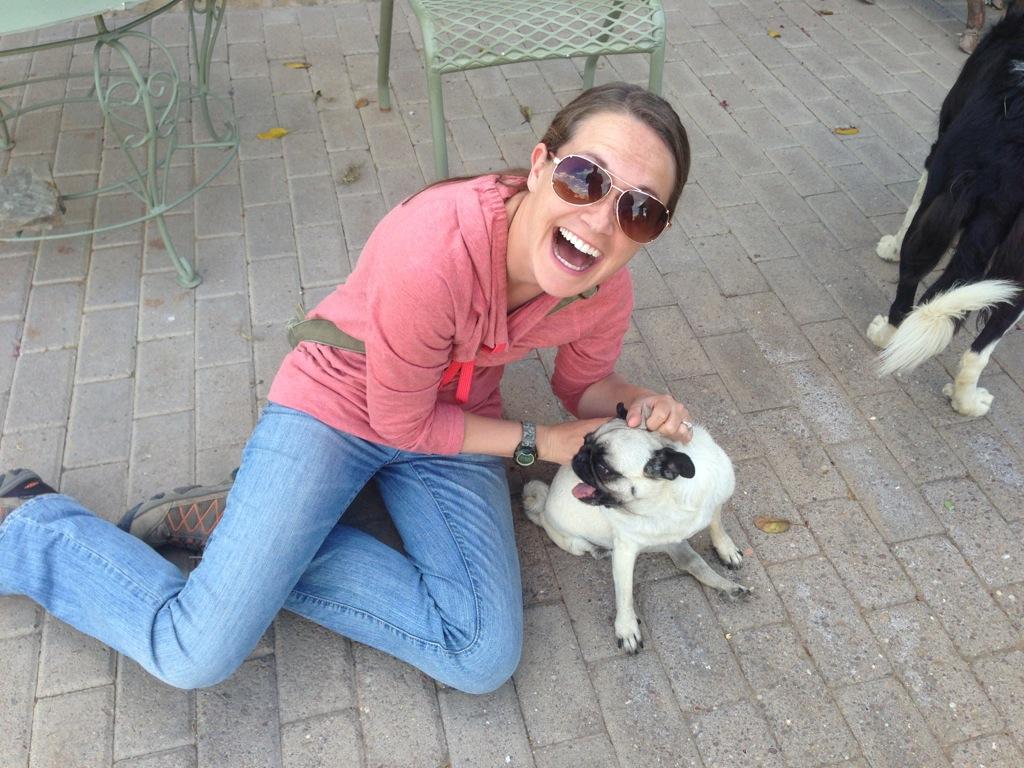 Stephanie found a 3 legged Pug!