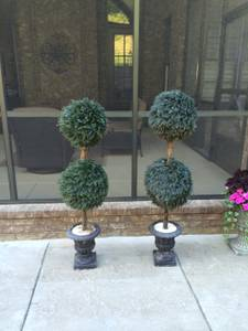 Pair of Outdoor Topiaries     $50     View on Craigslist