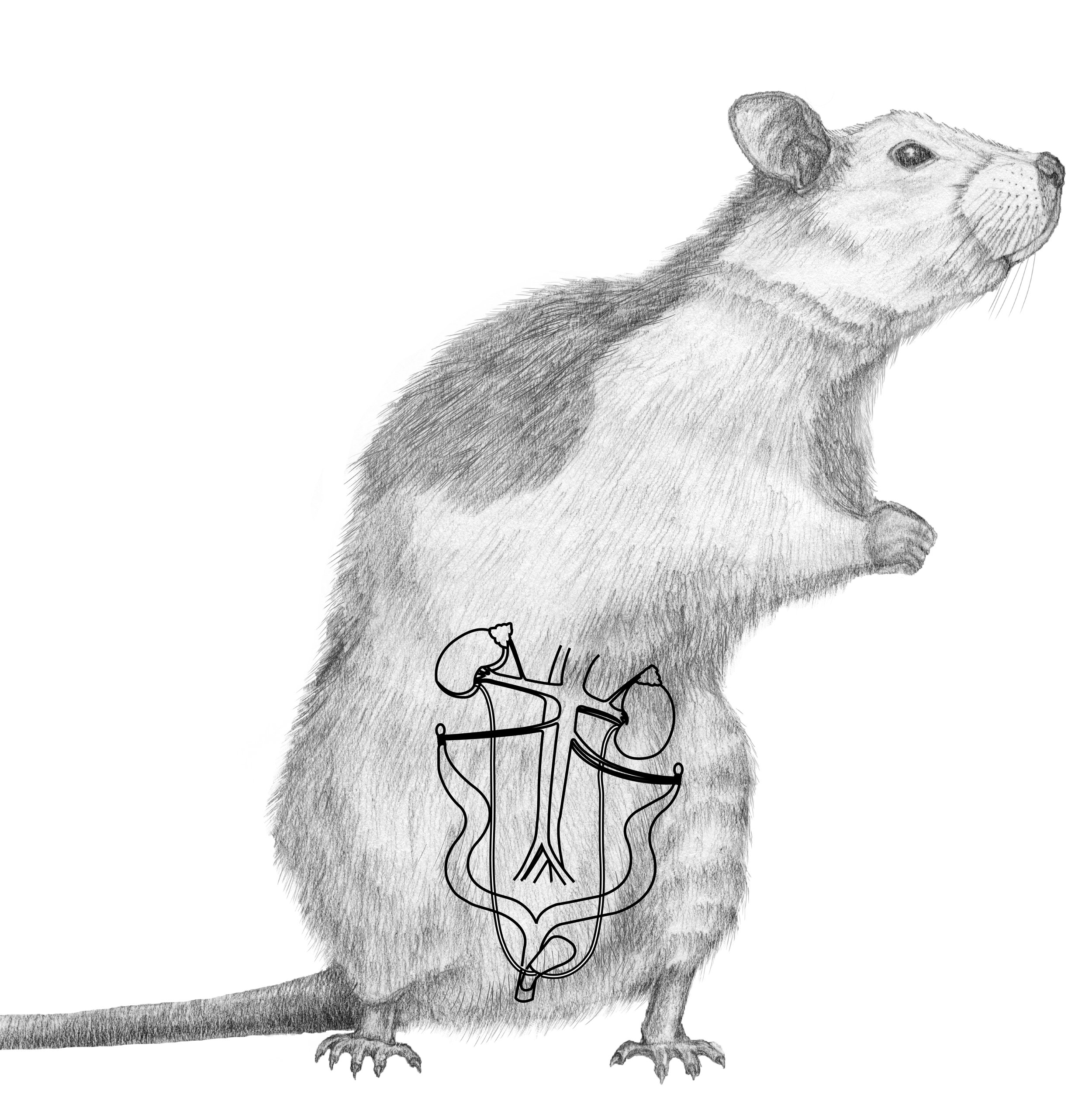 Rat Dissection_f2-02-04.jpg