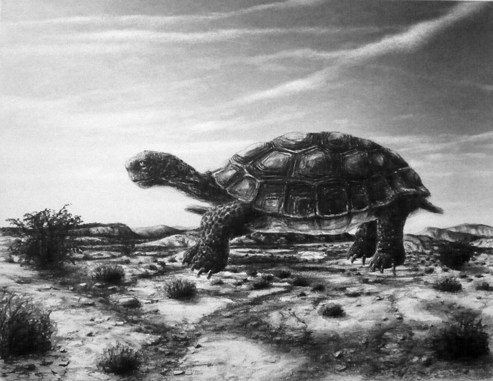 Desert Tortoise,  from the series Hover , 2009 Charcoal and pastel on paper