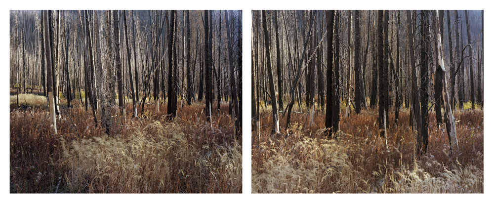 Early Fall (Wind in Grass), Idaho,   2008