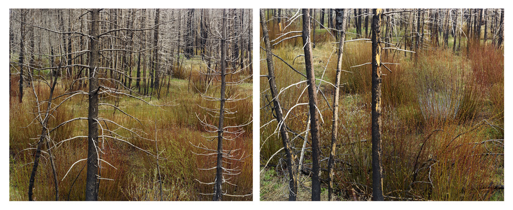 Early Spring (Willows), Idaho , 2008