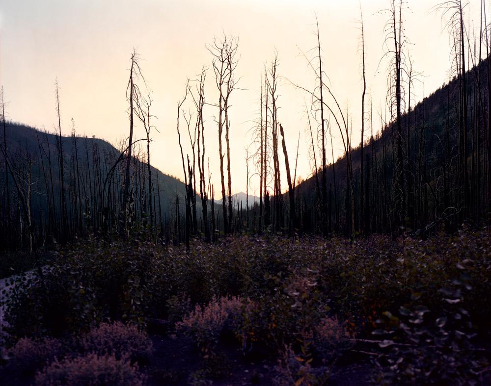 Late Summer (Looking West), Idaho,  2008