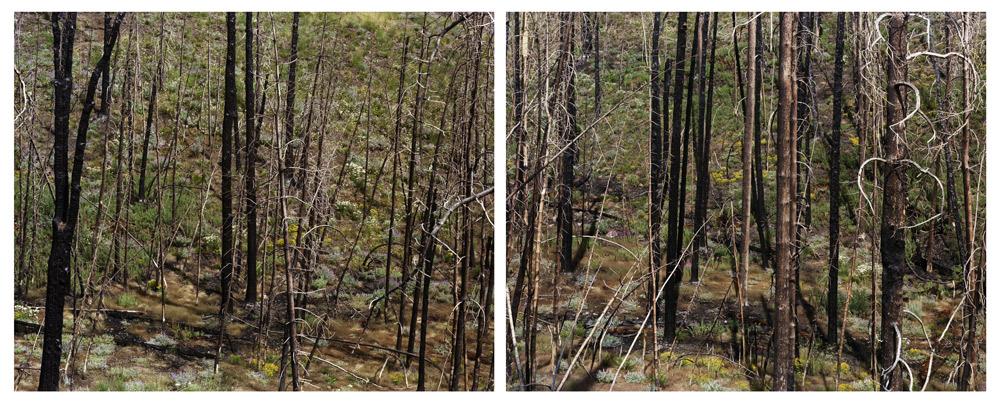 Midsummer     (Fallen Trees and Shadow), Idaho,   2008