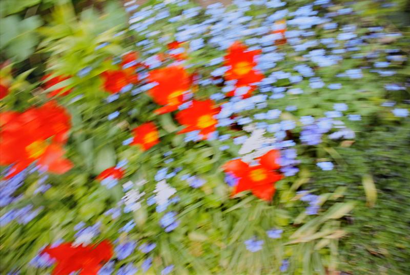 Rinko Kawauchi, Untitled , [blurred flowers] from the series  Murmuration , 2010