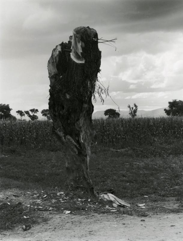 Manuel Alvarez Bravo, Y por las noches, gemia , (and in the night it moaned), 1945