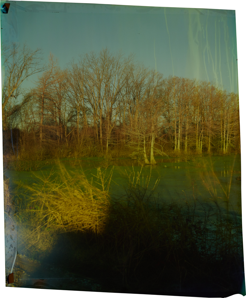 County Line at Annis Brake, V_3 , 2014 Image on Ilfochrome paper, unique photograph 33.5 x 28 inches
