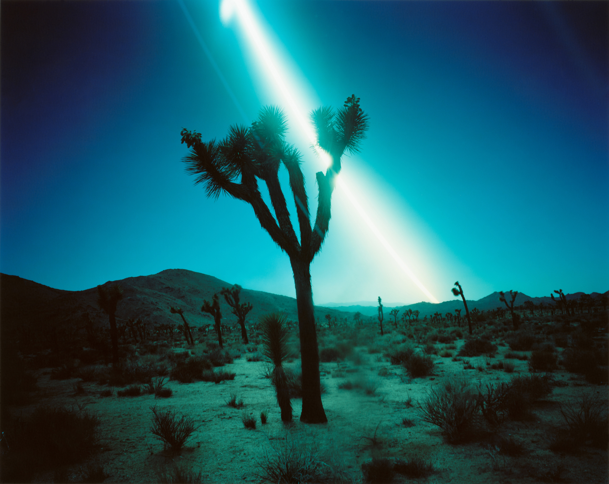 Ken Kitano ,  Joshua Tree , 2013; from  Day Light