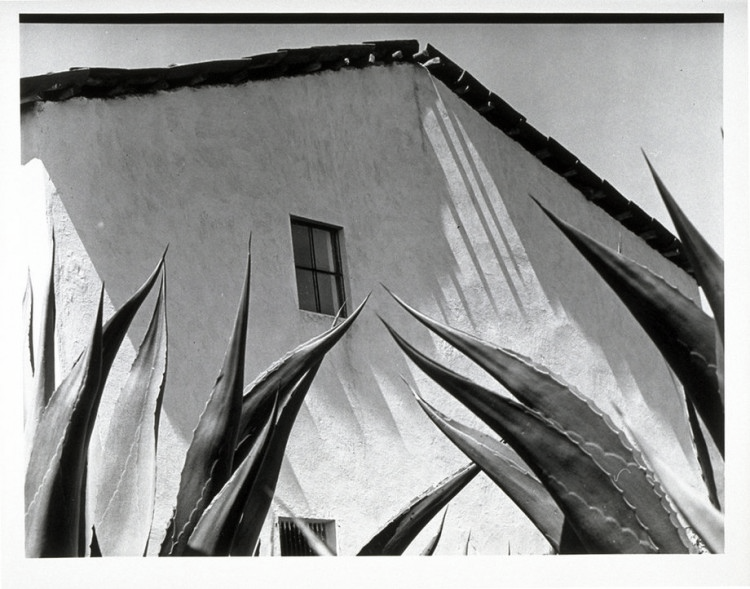 Manuel Álvarez Bravo, Window on the Agaves (Ventana a los magueyes), 1976