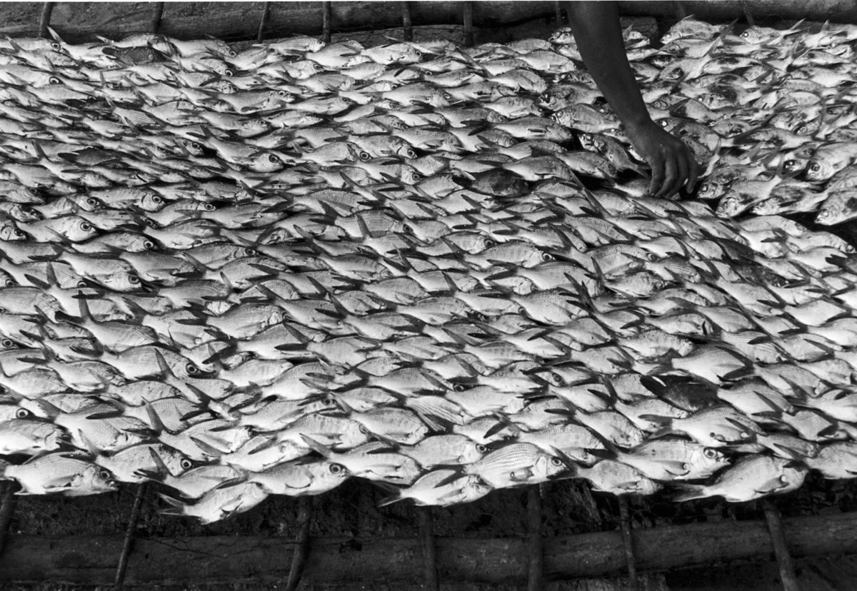 Pescaditos de Oaxaca, Oaxaca,  1992  8 x 10 inch Silver Gelatin Print