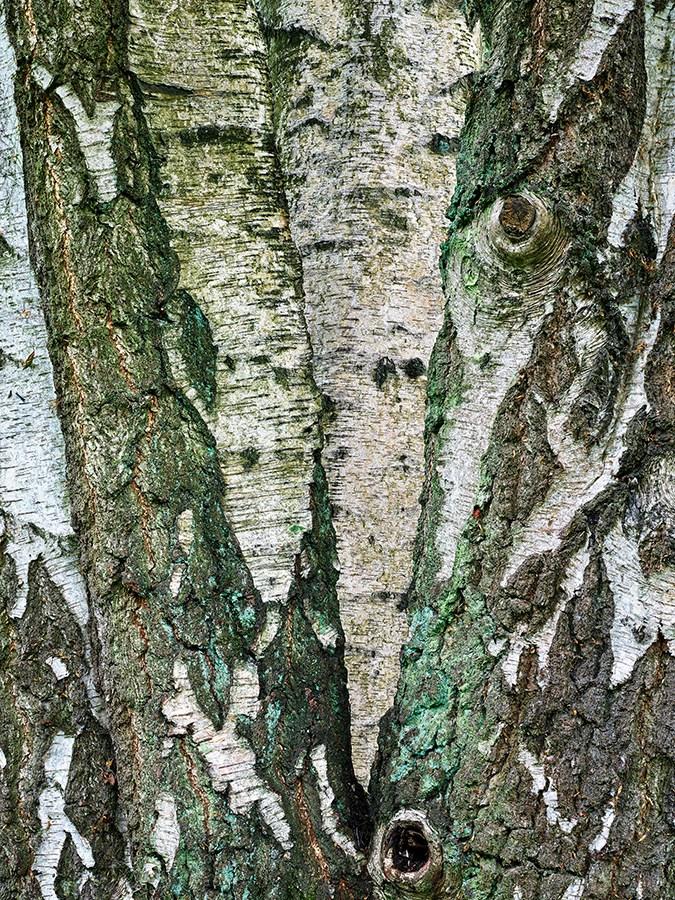 Tree-Trunks-in-Hampstead-Heath-London-England-2017-After-Constable-series-1-2.jpg