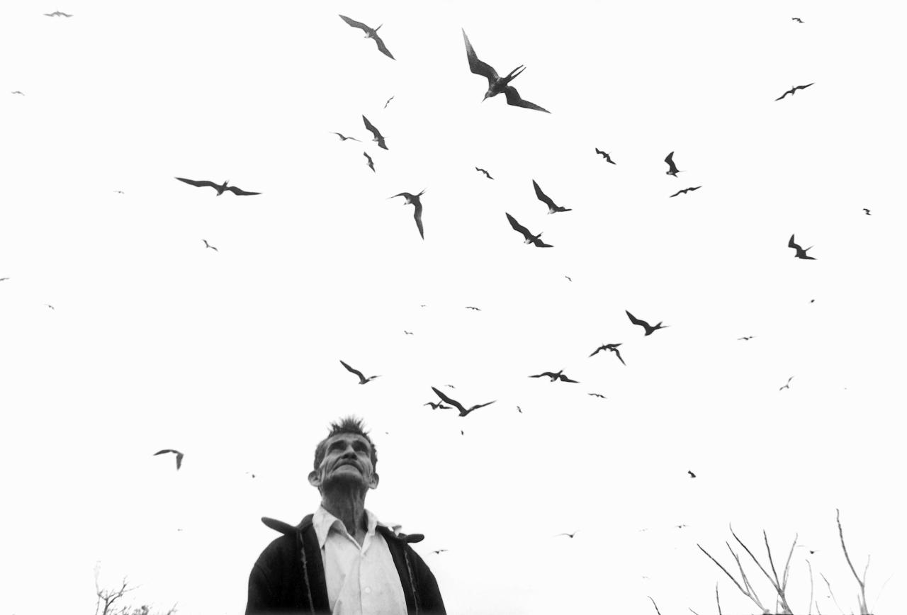 Graciela Iturbide    Señor de los Pájaros , Nayarit, Mexico, 1984  16 x 20 inch Silver Gelatin Print