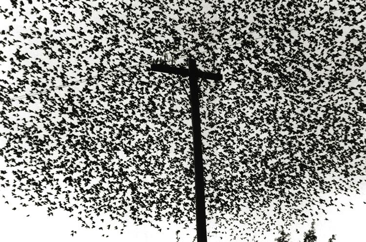 Graciela Iturbide,  Pajaros en el Poste de Luz ,  Carretera a Guanajuato, Mexico,  1990