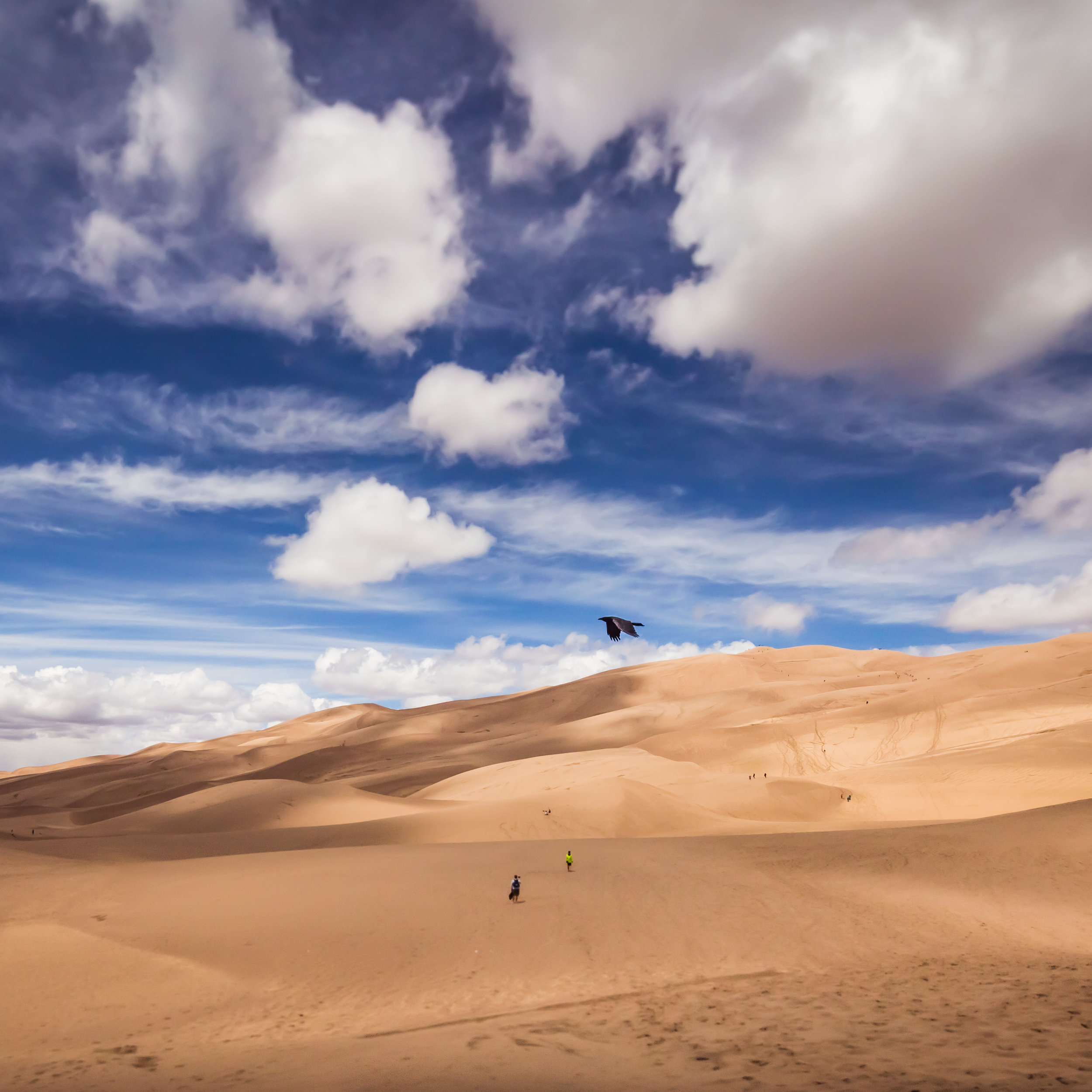 Dunes Bird - 12x12 print in a 16x16 mat  Taken on May 15, 2015 in the Great Sand Dunes National Park.  That bird just flew into the frame. I got lucky with this one.  First shown at the Denver Art Society -November 2016 First Friday.